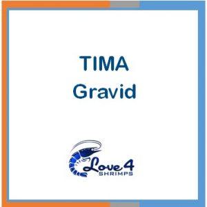 TIMA Gravid